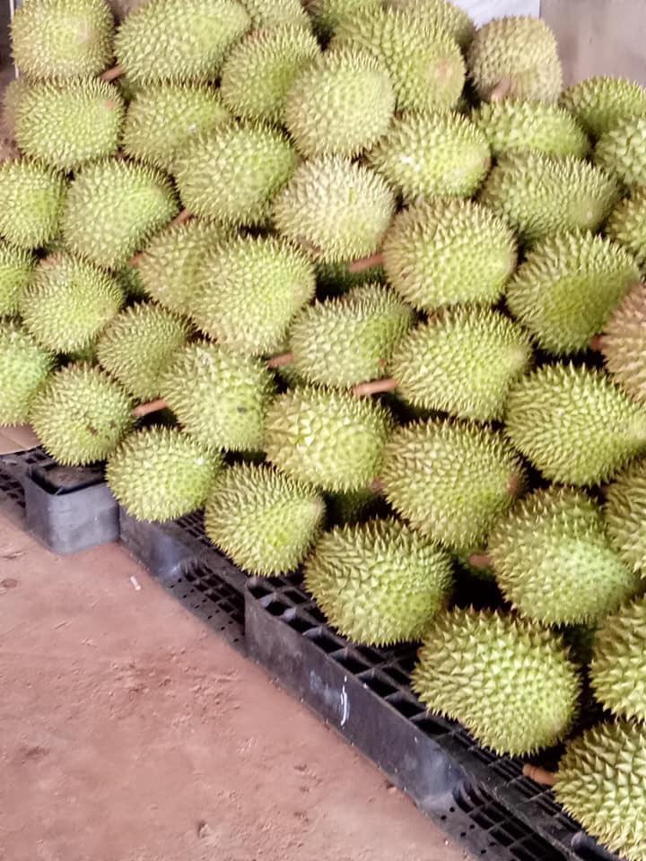 Sầu riêng 6 ri ngon ở Sài Gòn