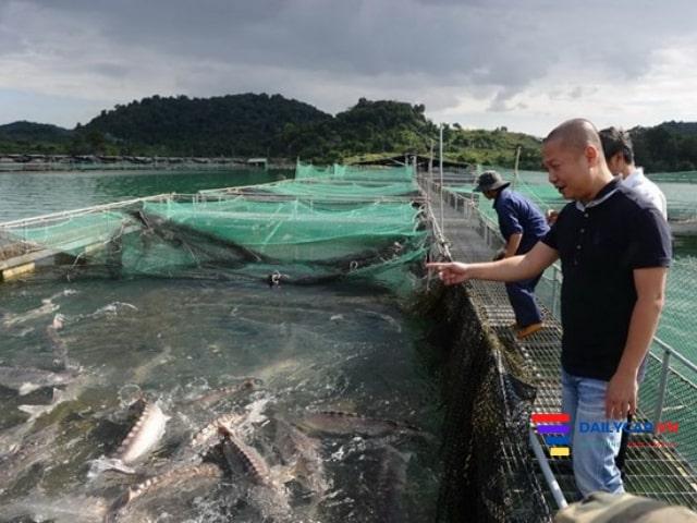 Giá cá tầm Việt Nam